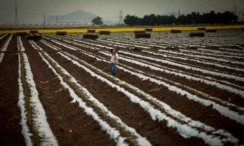 Crece riesgo global por degradación del suelo