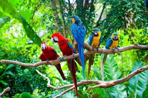 Resultado de imagen de biodiversidad en latinoamerica