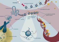 estudio de fármaco oncológico creado por la UNAM