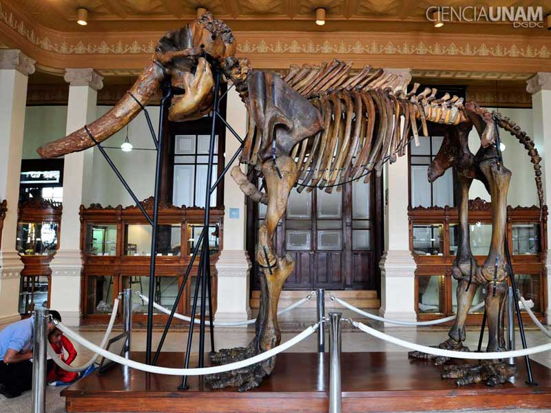 Colección Nacional de Paleontología
