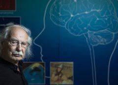 cerebro y la inteligencia artificial