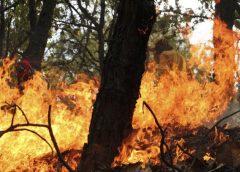 Incendios forestales dañan casi 380 mil hectáreas