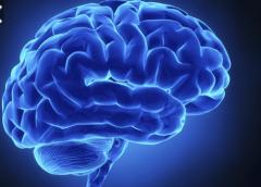 Estudian la manera en que el cerebro presta atención