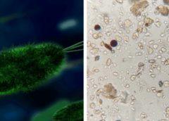Mutan microbios para sobrevivir en el espacio