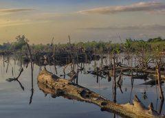 acabar con manglares